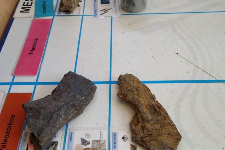 Orioko ikasleekin fosilak ikertzen